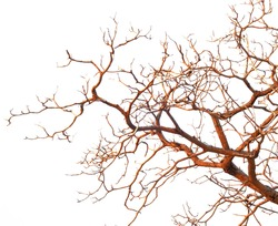 Bare branches of a tree isolated on white background