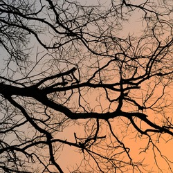 bare branches of trees