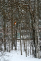Bare branches of trees. Autumn and winter background