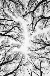 Bare branches of trees in winter look like hands of humans pointed up to the clear sky
