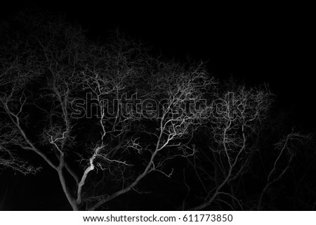Bare deciduous tree with curved branches during night - sky is black, branches are lit by artificial light (dramatic contrast, underexposure) #611773850
