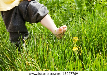 bare foot of the child over dandelion