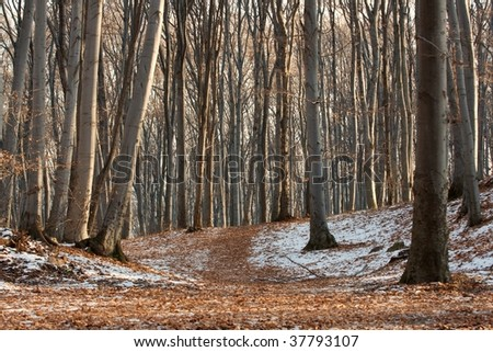 Bare forest in winter with frost on the ground