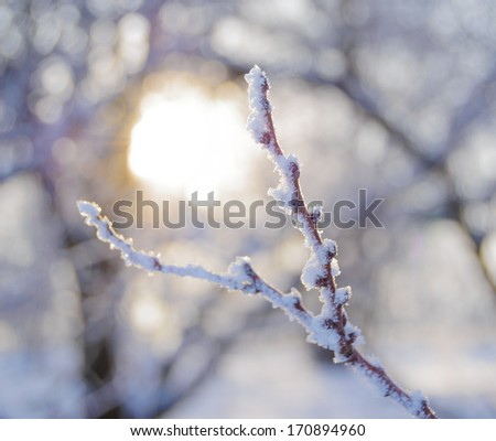 Bare Frozen Branch in the Beautiful Warm Yellow Sun Beams