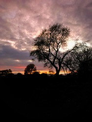 Bare leafless tree silhouetted against a c;loudy sky as the sun finally disappears