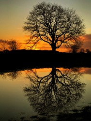 Bare, leafless tree silhouetted against a golden sunset and reflected in floodwater