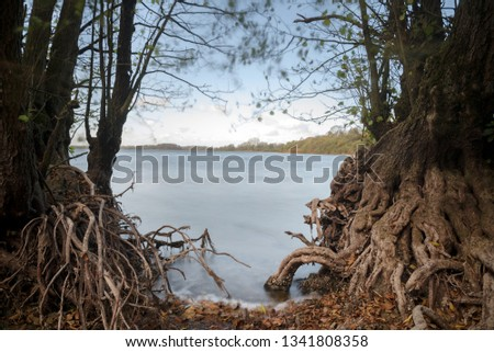 bare roots of alder trees on the lake shore, smooth blue water by long time exposure, copy space