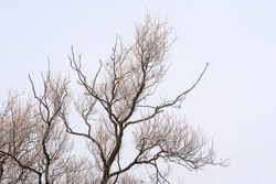 Bare tree covered in frost