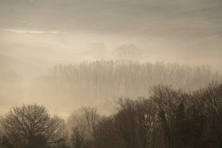 Bare tree in a forest engulfed in yellow mist.