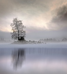 Bare tree in foggy landscape with moody sky, reflected in shiny ice of lake