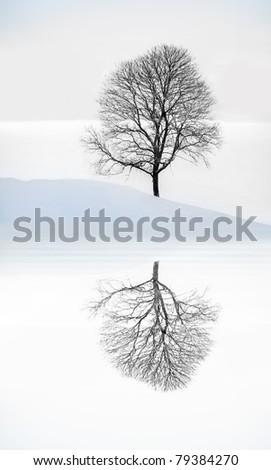 Bare tree in winter landscape reflected in water