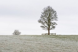 Bare tree in winter on edge of remote frosty rural countryside farm field panoramic landscape