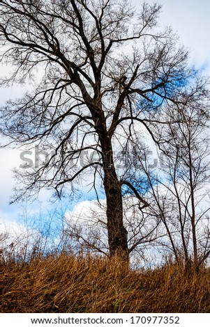 bare tree in winter with tall grass and a cloudy sky