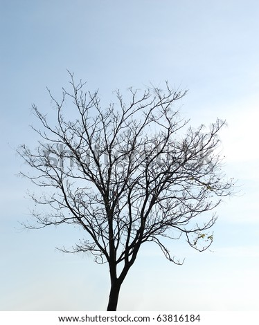 Bare tree on blue sky background