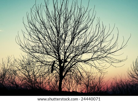 tree silhouette clip art. 2010 dresses pine tree silhouette pine tree silhouette clip art. stock photo
