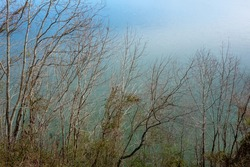 Bare trees along the edge of Watts Bar Lake in Tennessee, USA.