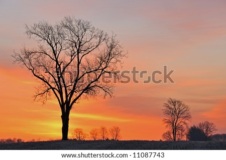 Bare trees in a rural landscape silhouetted against a colorful dawn sky, Michigan, USA