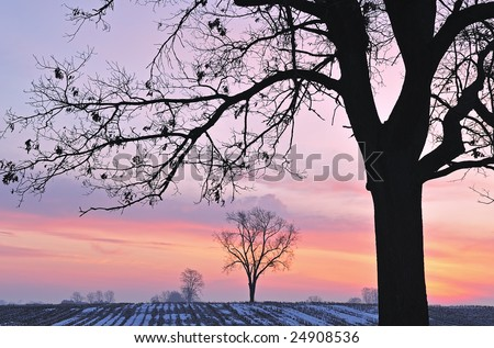 Bare trees in a rural winter landscape silhouetted against a colorful dawn sky, Michigan, USA
