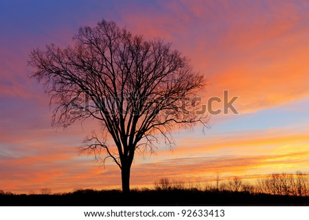 Bare trees in a winter landscape silhouetted against a colorful dawn sky, Fort Custer State Park, Michigan, USA