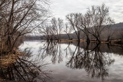 Bare trees reflection in the St. Croix River at Marine on St. Croix, Minnesota.