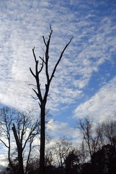 Bare Trees - Silhouette against a Moody Blue Sky with Clouds