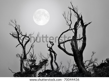 Bare trees with full moon background in a scary and spooky scene as Halloween theme.