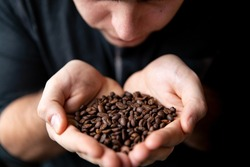 Barista man holds roasted coffee grains in his hands and sniffs them