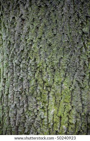 Bark - stock photo