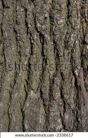 elm tree bark. elm tree bark pictures. red