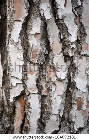 bark of a tree, usable as background