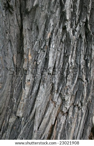 Bark of a tree with dark edges. A structure