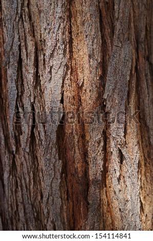 Bark of acacia tree texture with sunshine