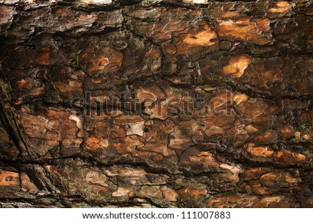 Bark of Pine tree background - stock photo