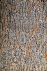 Bark of pine tree. Seamless tree bark background. Brown texture of the old tree. Natural coniferous bark background