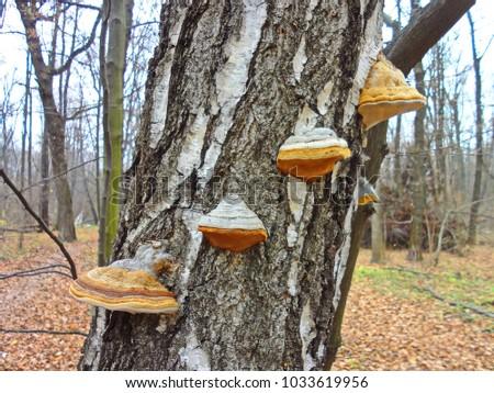 bankura forest tinder dating site