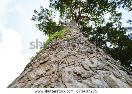 bark of tree ,image showing look up to sky, blurring sky background #673487275
