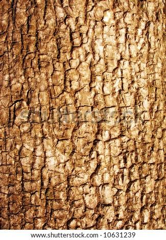 Bark of tree - texture