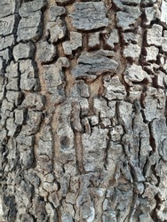 bark pattern of tree is rugged surface