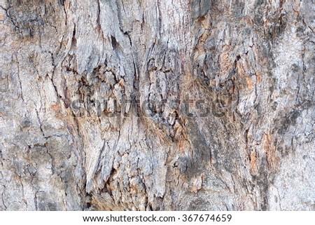 bark texture #367674659
