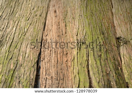 Bark texture, diminishing perspective. Shallow deep of field