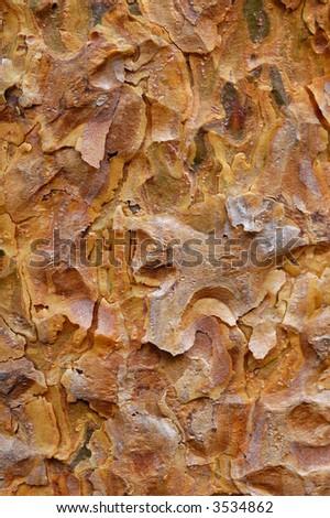 Bark texture of Scots Pine