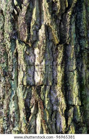 bark tree structure