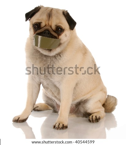 barking dog problems - pug with tape on mouth