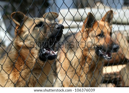Barking dogs behind the fence