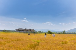 barley field scenery with blue sky near Hwangryongsa site and Bunhwangsa temple in Gyeongju, Korea