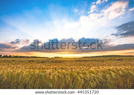 barley field sunset landscape HDR image style. #445351720
