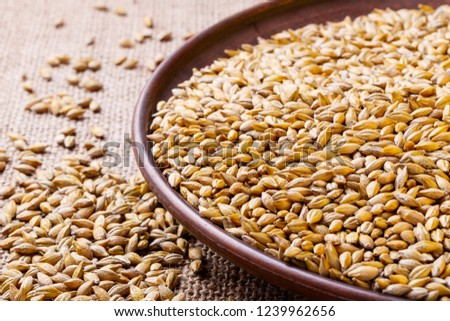 barley grain on a plate #1239962656