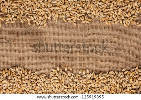 Barley is on burlap can be used as background