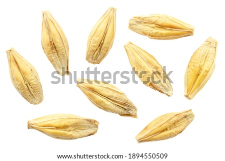 Barley seeds are isolated on white, top view, macro. Barley seeds isolated on a white background. Grains of barley malt on a white background. Set of barley grains isolated on white background. Stockfoto ©