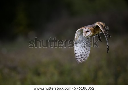 Barn Owl Canadian Raptor Conservancy